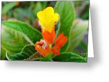 Sunset Bells Flower Greeting Card