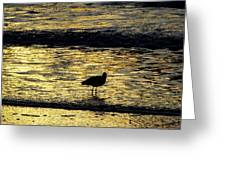 Sunset Bird Greeting Card