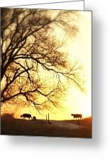 Sunset Call.. Greeting Card