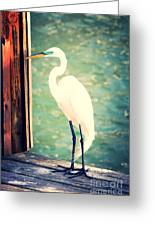 Sunset Dock Visitor Greeting Card