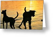 Sunset Dogs  Greeting Card