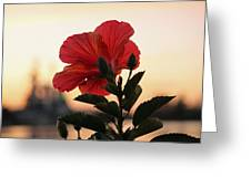 Sunset Flower Greeting Card