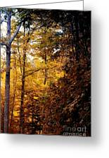 Sunset Forest Greeting Card