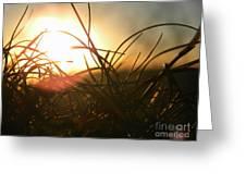 Sunset Grass 1 Greeting Card