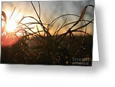Sunset Grass 2 Greeting Card