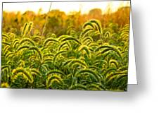 Sunset Grasses Greeting Card