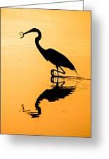 Sunset. Great Blue Heron. Greeting Card