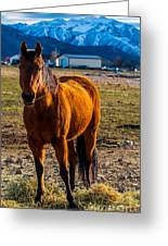 Sunset Bay Horse Heber Valley Utah Greeting Card