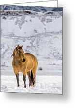 Sunset Horse In Montana Greeting Card
