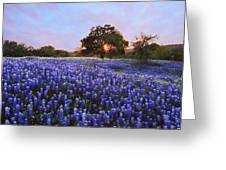 Sunset In Bluebonnet Field Greeting Card