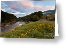 Sunset In Cobb Valley Of Kahurangi Np Of New Zealand Greeting Card