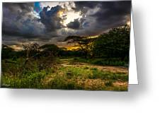 Sunset In The Bush Greeting Card