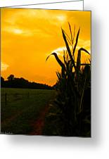 Sunset In The Cornfield Greeting Card