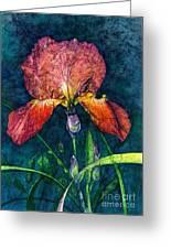 Sunset Iris Greeting Card
