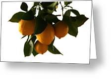 Sunset Lemons Greeting Card
