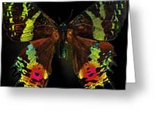 Sunset Moth Greeting Card