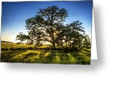Sunset Oak Greeting Card