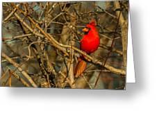 Sunset On A Norhern Cardinal Greeting Card