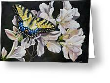 Sunset On A Swallowtail Greeting Card