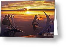 Sunset On Caribou Antlers In Whitefish Lake Greeting Card
