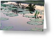 Sunset On Pond Lily Pads Greeting Card