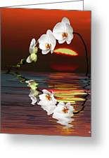 Sunset Orchids Greeting Card