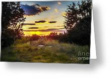 Sunset Over Field Of  Flowers Greeting Card