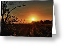 Sunset Over Little Lagoon Bayou Greeting Card