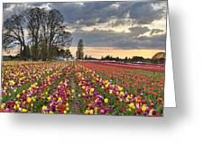 Sunset Over Tulip Flower Farm In Springtime Greeting Card