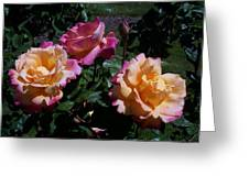 Sunset Painted In Roses Greeting Card