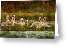 Pelicans Rest Greeting Card