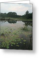 Sunset Pond And Lilys Greeting Card