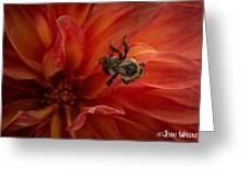Sunset Red Dahlia Greeting Card