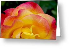 Sunset Rose At Dawn Greeting Card