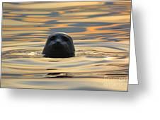 Sunset Seal Greeting Card