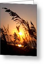 Sunset Seaoats Greeting Card