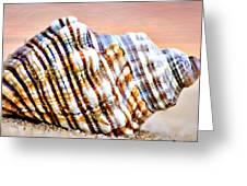 Sunset Seashell Greeting Card