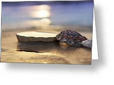 Sunset Shells Greeting Card