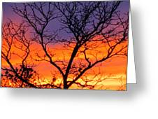 Sunset With Tree Silhouette Greeting Card