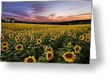 Sunset Sunflowers Greeting Card by Debra and Dave Vanderlaan