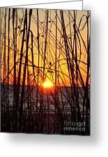 Sunset Through Grasses Greeting Card