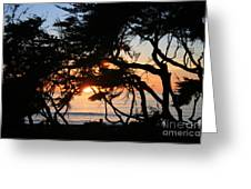 Sunset Through The Cypress Trees Cambria Greeting Card
