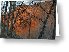 Sunset Through The Forest Greeting Card