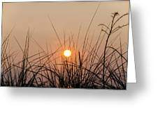 Sunset Through The Grass - Villas New Jersey Greeting Card by Bill Cannon
