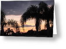 Sunset Through The Palms Greeting Card