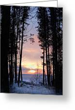 Sunset Through The Pines Greeting Card
