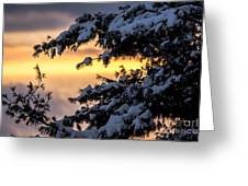 Sunset Through The Snowy Branches Greeting Card