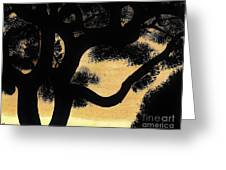 Sunset Through The Oak Trees Greeting Card