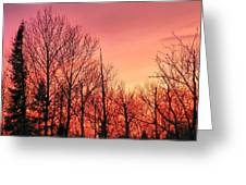 Sunset Through Trees Greeting Card