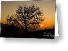 Sunset Tree Greeting Card by Anne Gilbert